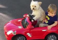 WATCH: Puppy drives boy around in toy car