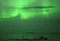 WATCH: Whales swim under the Northern Lights