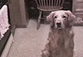 WATCH: Dog can breakdance