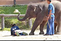 WATCH: Tourists get massaged by elephants