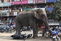 WATCH: Elephant's rampage flattens town