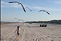 VIDEO: Panicked kid is terrorized by seagulls