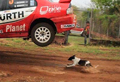 WATCH: Lucky dog miraculously jumped by rally car