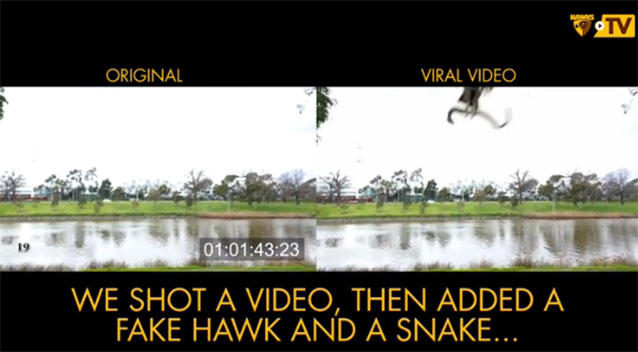 Hawthorn goes viral with launch of finals campaign