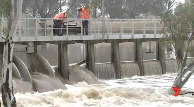 Soaking wet koala rescued from floods in Australia
