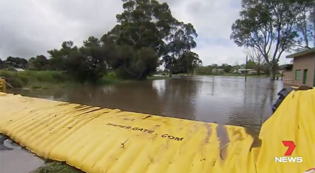 Photo of koala resting during floods goes viral
