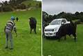 WATCH: Crazy 81-year-old koro has standoff with 'mad' bull
