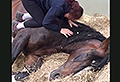 VIDEO: Sleepy horse refuses to get up for work