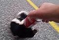 VIDEO: Brave man helps out desperate skunk