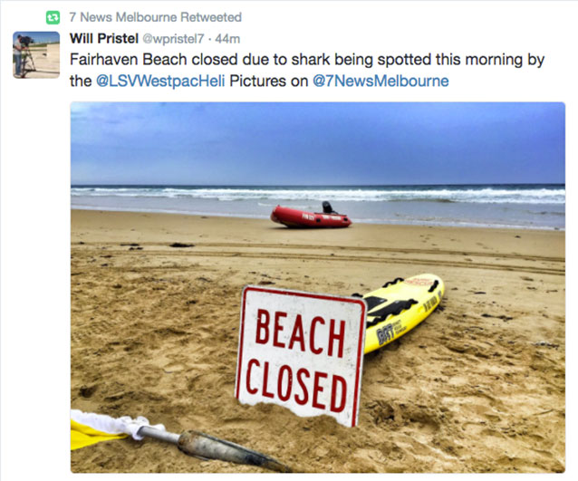 Vic beach reopens after shark sighting