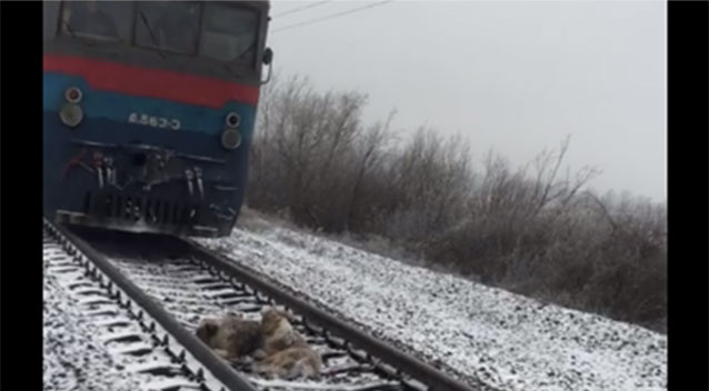 Dog in Ukraine sticks by his companion injured on train tracks