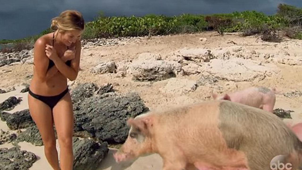 Resultado de imagen de swimming pigs dead