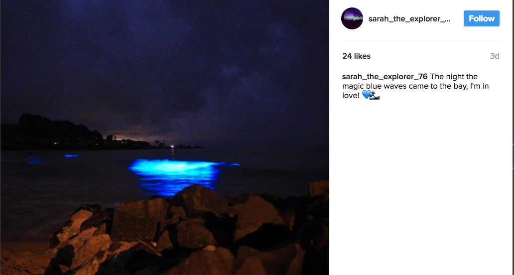 Bioluminescence dazzles beachgoers at Tasmania's Preservation Bay