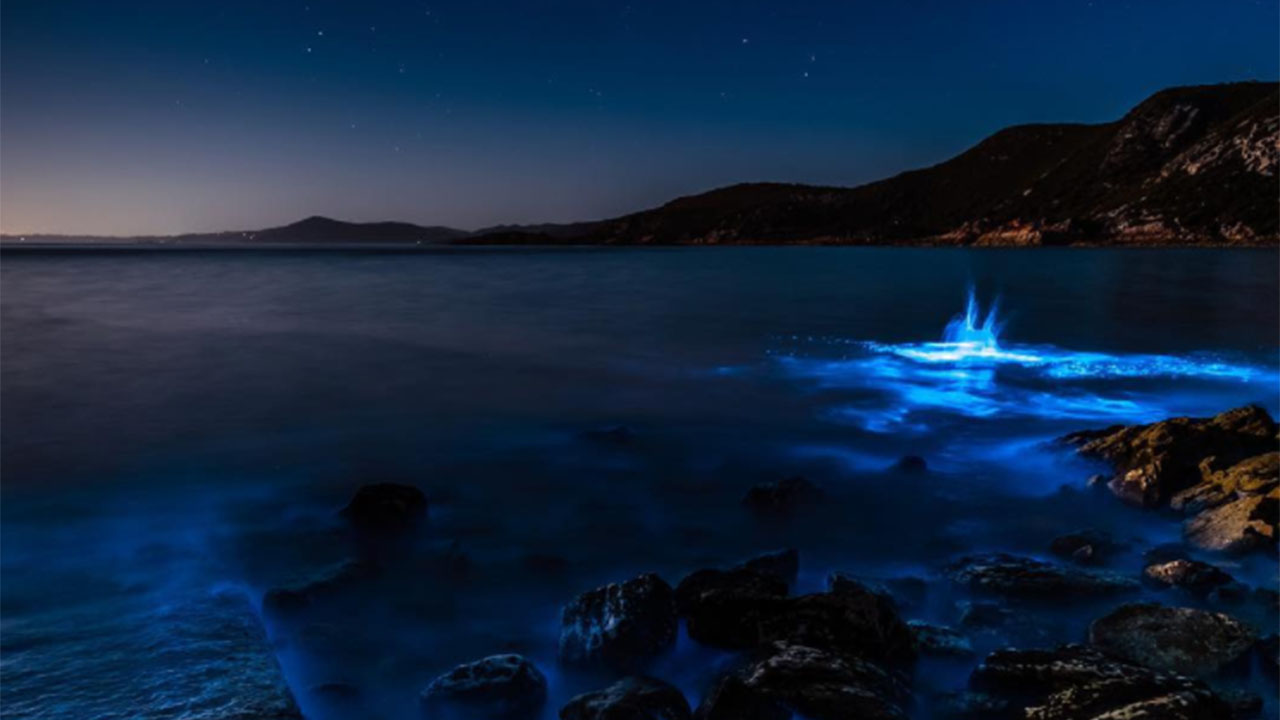 A beach in Tasmania turned electric blue and the Instagrams are incredible