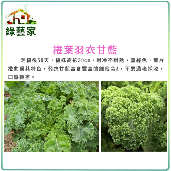 綠藝家大包裝A73.捲葉羽衣甘藍種子10克
