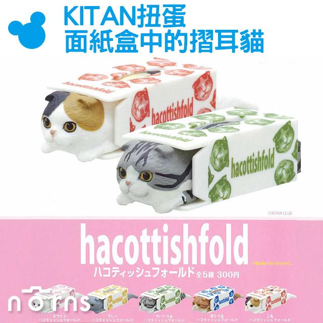 NORNS KITAN扭蛋面紙盒中的摺耳貓蘇格蘭摺耳貓&衛生紙盒可堆疊日本轉蛋公仔玩具裝飾