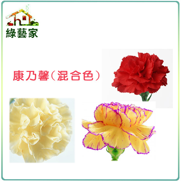 【綠藝家】H33.康乃馨(混合色,高40~55cm)種子30顆