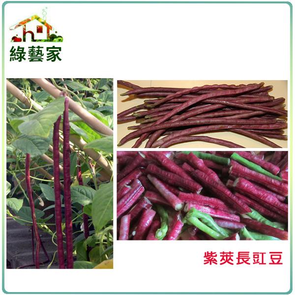 【綠藝家】E15.紫莢長豇豆種子(菜豆、豆角)30顆