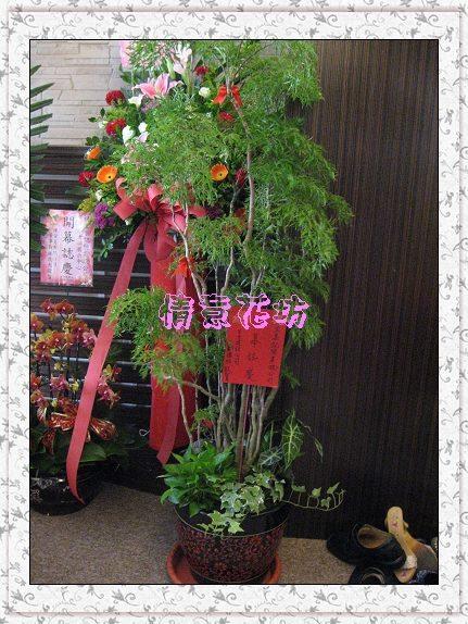 FA-02祝賀盆栽開幕喬遷榮陞富貴樹落地型組合盆栽~全台皆配送價3800元永和市情意花坊
