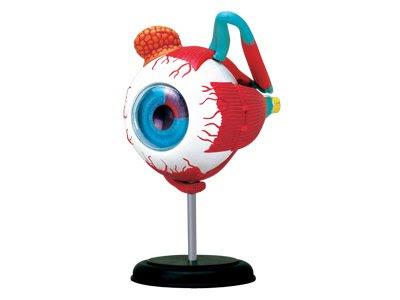 【4D 立體拼組模形】人體系列-眼球 26054