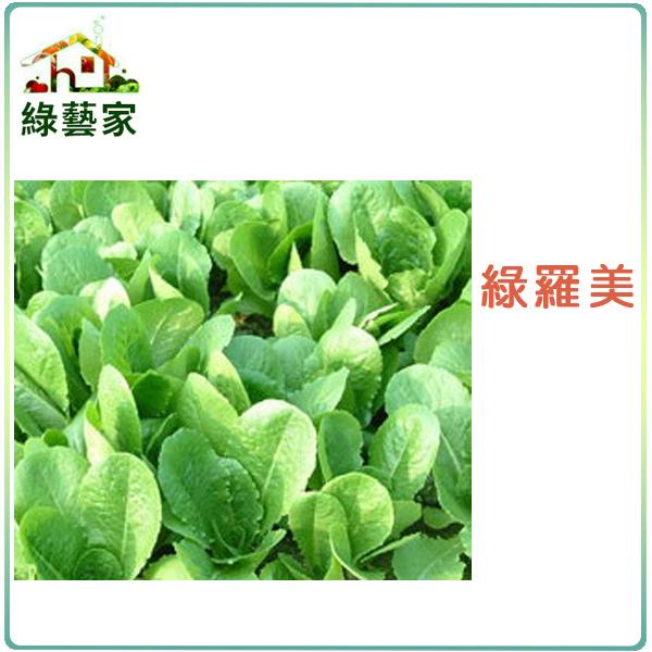 【綠藝家】A29.羅美生菜種子1500顆(美國進口,蘿蔓生菜 ,竹筍妹仔)
