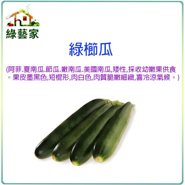 【綠藝家】G62.綠櫛瓜(阿菲.夏南瓜.節瓜.嫩南瓜.美國南瓜)種子2顆