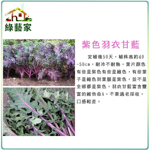 綠藝家大包裝A74.紫色羽衣甘藍種子10克