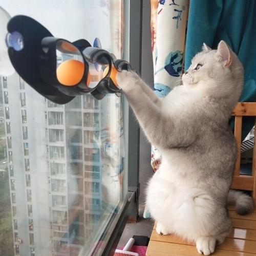 【培菓幸福寵物專營店】dyy》新款貓咪乒乓球軌道吸盤玩具55*8cm