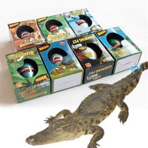 重回侏羅紀恐龍孵化蛋孵化蛋孵化恐龍蛋長大蛋魔術蛋水孵蛋侏羅紀世界公園瞎拼有理