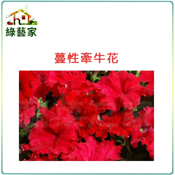 【綠藝家】H44.蔓性牽牛花種子30顆