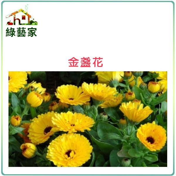 【綠藝家】H19.金盞花(黃色,高20~30cm)種子30顆