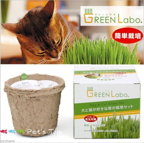 Pet's Talk~日本GreenLabo新鮮燕麥DIY貓草盆貓貓狗狗都可吃