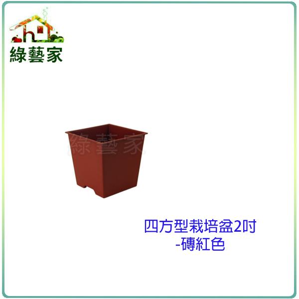 綠藝家005-D112-RE四方型栽培盆2吋-磚紅色厚