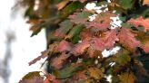 Warm temperatures today in Lancaster County, but rest of week will see cooler fall weather