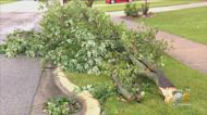 Trees Snapped, Roads Blocked As Severe Storms Hit Far South Suburbs, Northwest Indiana