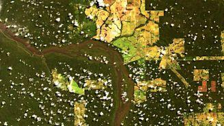 Deforestation in Brazil has rocketed since Bolsonaro became president
