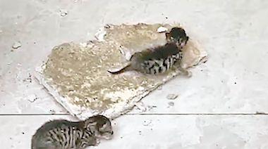 天降8貓 嚇煞辦公室職員 - 東方日報