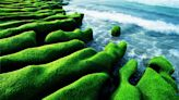 CNN票選臺灣8大秘境 北海岸「抹茶地毯」奇景持續到5月