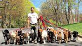 不想和愛犬分離!超狂遛狗員一次牽20隻狗散步、每天撿50隻狗大便