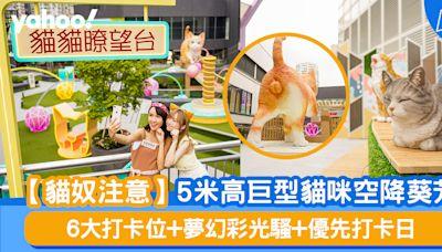【貓奴注意】5米高巨型貓咪空降葵芳 6大打卡位+夢幻彩光騷+優先打卡日
