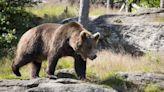 釣友被野生黑熊殺害 戰鬥民族金牌選手持刀單挑「成功報仇」