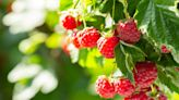 From Berries to Bananas, We Found the 25 Healthiest Fruits—So Get Ready to Stock Up