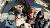 Bellevue Considers Dangerous Dog Ordinance | NewsRadio 1110 KFAB