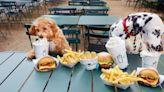 狗狗亂跑也能快速定位!Fi打造的智慧狗項圈助攻估值破2億美元,背後有強大團隊撐腰|數位時代 BusinessNext