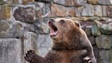 These money and investing tips can help keep your portfolio safe from the bears