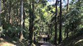 懶人包》7/27二級警戒適度解封!林務局開放部分森林育樂場域,林道、自然步道開放情形總整理 - 活動大聲公 - 微笑台灣 - 用深度旅遊體驗鄉鎮魅力
