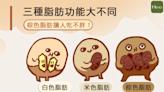 三種脂肪功能大不同,棕色脂肪讓人吃不胖!