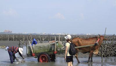 防範疫情擴散風險 彰縣停辦「國際海牛文化節」及「國慶慶祝活動」 | 蕃新聞