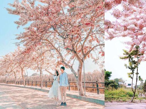 粉紅花海超夢幻!盤點6處絕美賞花景點,1200棵粉紅花旗木盛開超壯觀!