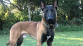 Georgia K9 officer killed in rollover accident